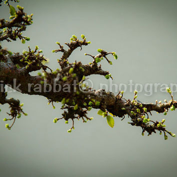 Old bonsai branch Fine Art Photography Minimalist Tree Branch Nature Green Bonzai Macro Close-up Zen Meditation Feng-Shui