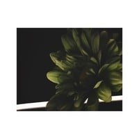 Green Daisy in Light and Dark Canvas Print