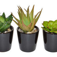 "10"" Succulents in Planter, Faux, Set of 3, Arrangements"