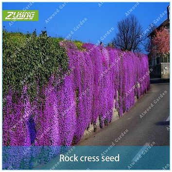 ZLKING 100pcs Purple Rock Cress Perennial Ground Cover Rock Celery Seeds Of Perennial Garden Flowers For Home Decorative