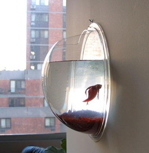 wall mount hanging beta fish bubble from things. Black Bedroom Furniture Sets. Home Design Ideas