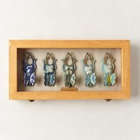 Entomology Shadowbox by Anna Collette Hunt