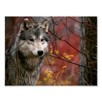 Wolf Posters from Zazzle.com
