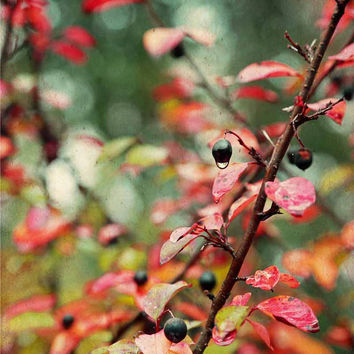Leaves and Berries in Fall Colors - Red - Orange - Teal -  Green - Fine Art Photo - FREE SHIPPING