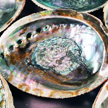 ABALONE SHELL Large Premium Colorful Natural Sea Shell - Use for Smudging with White Sage