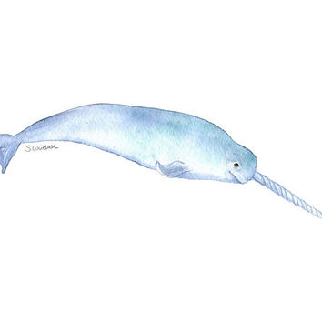 Narwhal Watercolor Painting - 8 x 10 - Giclee Print - 8.5x11