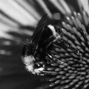 DIGITAL DOWNLOAD photo, B&W, Black and White bee nature, Honey Bee photo Bee photo Echinacea flower picture fine art turtlesandpeace gift
