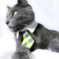 Extra small dog/cat gray and green plaid necktie collar