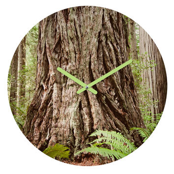 Bree Madden Redwood Trees Round Clock
