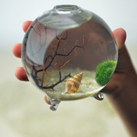 Marimo  Japanese Moss Ball Aquarium  in miniature by PinkSerissa