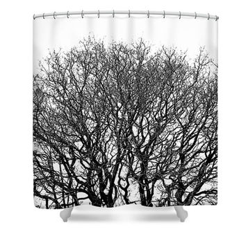 Black and white shower curtain, black and white bathroom decor, tree shower curtain, minimalist bathroom, nature decor, photo shower curtain