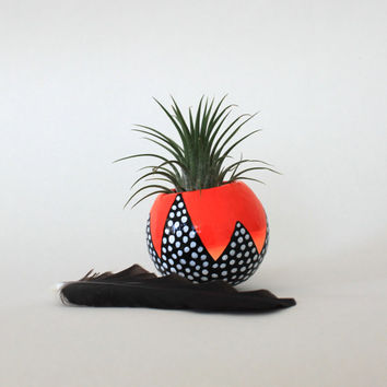 Air Plant Planter with Air Plant -  Hand Painted.  Neon Orange Ombre with Black and White.  Live or Faux Air Plant Option