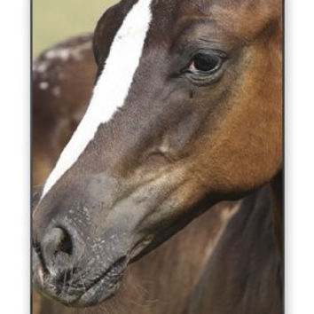 Beautiful Equestrian Appaloosa Horse Image iPhone 4 Quality Hard Snap On Case for iPhone 4 4S 4G - AT&T Sprint Verizon - Black Frame
