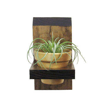 Wall Planter, Air Planter, Succulent Planter, Air Plant Holder, Tillandsia Planter, Wood Planter, Modern Planter, Mini Planter, Rustic Gold