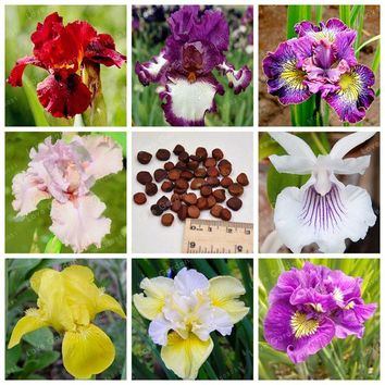 Rare Iris Seeds 24 Colours Bonsai Flower Seeds Heirloom Iris Tectorum Perennial Flower Seeds Plant For Home Garden 20 Pcs
