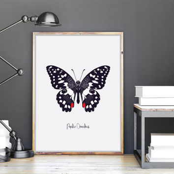 Papilio Demoleus Printable Wall Art | Butterfly Print | Insects Print