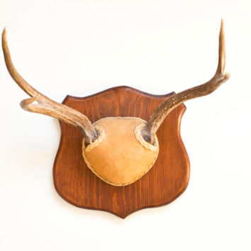 Wall Mount Deer Antlers, Mounted Horns on Plaque with Leather, White Tail Deer Mancave Rusitc Cabin Decor
