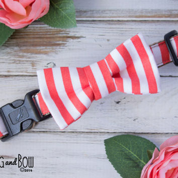 Coral Stripe Dots Dog Collar with Optional Leash and Removable Bow Tie