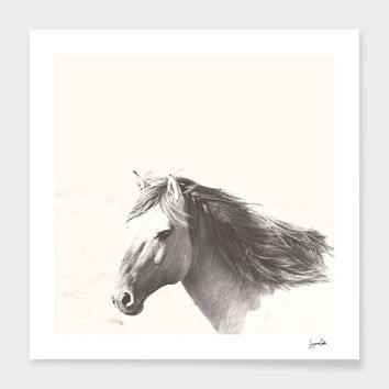 «Brumby» Art Print by Suzanne Carter - Numbered Edition from $24.9 | Curioos