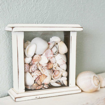 Shell Collection, Beach Decor
