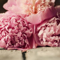 Peonies photograph- pink , cream,  rustic, flower, romantic, shabby chic, pastel,  floral, nursery, fine art photograph,