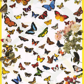 Butterflies Lepidoptera Insect Poster 24x36