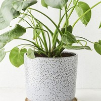 """Parker 10"""" Planter + Drainage Tray Set 