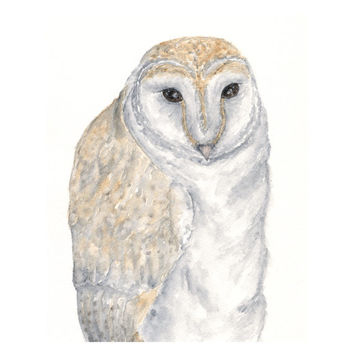Owl art, watercolor owl, barn owl, owl painting, forest animal, watercolor animals - 8X10 owl print