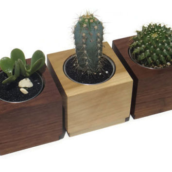 3 Succulent planters - Poplar or Walnut Handmade Planter with a natural finish, for birthday and wedding, wood planter.