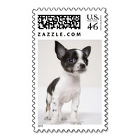 Chihuhua puppy standing on white fabric postage stamps