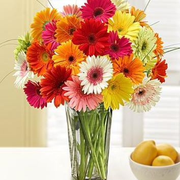 Two Dozen Gerbera Daisies with Clear Vase