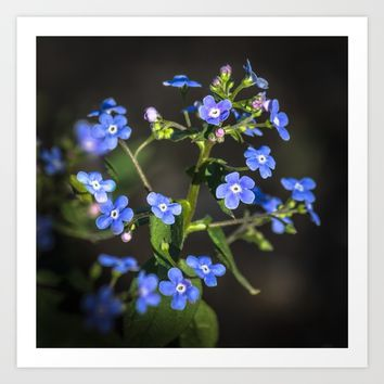 Forget-me-not Art Print by Svetlana Korneliuk