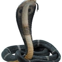 King Cobra Statue with Lifelike Details Colors and Tongue Sticking Out Hissing 13H