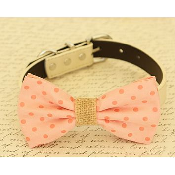 Peach polka dots dog Bow tie attached to collar, Pet wedding, Burlap