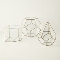 Terrarium Kit - Anthropologie.com
