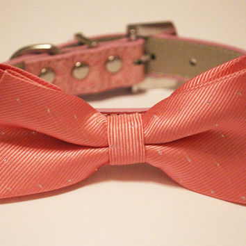 Blush wedding collar Dog Bow Tie, Chic and Elegent, Wedding Dog Accessory