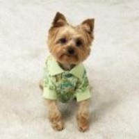 MEDIUM - Paisley Puppy Polo - Stylish Dog Shirt