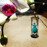 Real Insect necklace Beetle Jewelry Beetlejuice Bug necklace Terrarium jewelry Insect jewelry Egyptian scarab Glass terrarium necklace