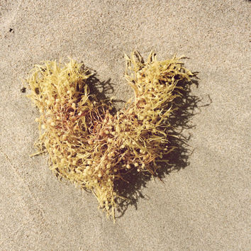 Wall Art Photography - Neutral Nautical Home Decor - Seaweed Art Print - Heart in the Sand - Beach Photo