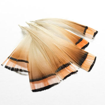 Feathers Natural Pheasant Tippet | Earrings feathers | Millinery Jewelry Crafts supplies| Hair accessories Material FA06