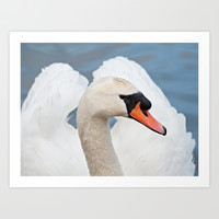 Beautiful Swan Art Print by Karl Wilson Photography