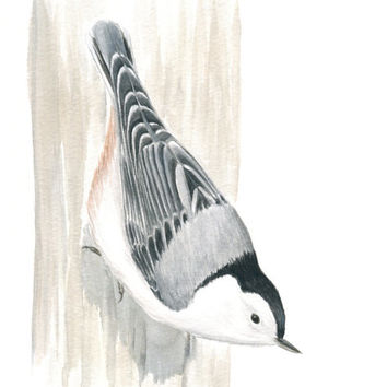 "Original Bird Art, Songbird Painting, White-breasted Nuthatch, Gray Bird Art, Grey Nature Painting, Watercolor and Gouache 10"" X 8"""