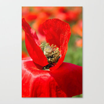 Red Poppy Flower fine art photography Floral Flora Botanical Petals Nature Bokeh Macro Bright Green home living wall decor gift under 50