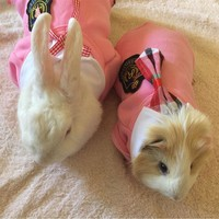 Fashion Pet Hamster Rabbit Clothes Cute School Style Clothes For Ferret Guinea Pig Cat Clothing Small Animal Pet Coat 30S2