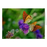 Beautiful Black and Orange butterflys Card