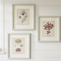 FRAMED CORAL PRINTS, SET OF 3