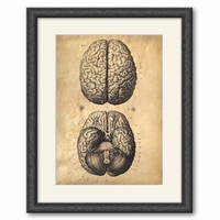 13x19 Vintage Anatomy. Brains poster. Human Body. Zombies. Horror. Science -002