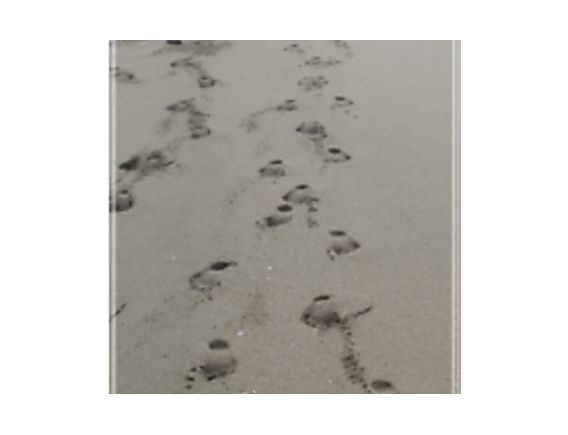 Footprints in the Smog