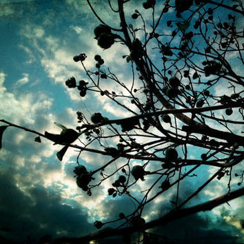 Photo Print Buds and Branches SALE by BRGproductions on Etsy