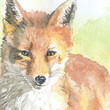 Red Fox Watercolor Painting Giclee Print - Fine Art - 11 x 14 - Nursery Art